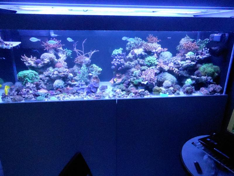 karlito's reef 3  - Page 2 Dscn2626