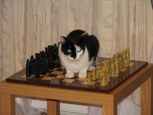 Funny chess  11929110