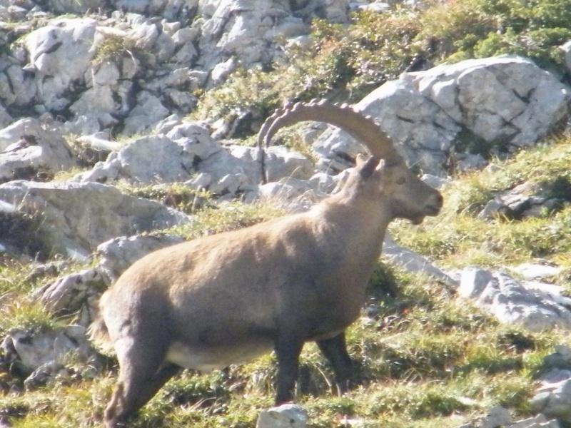 La faune du massif Photo_11
