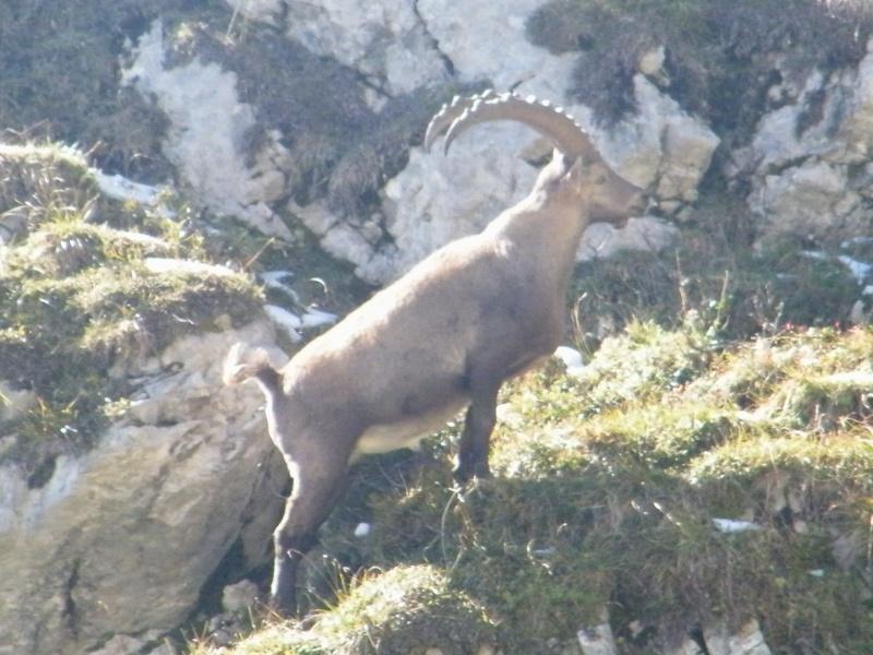 La faune du massif Photo_18