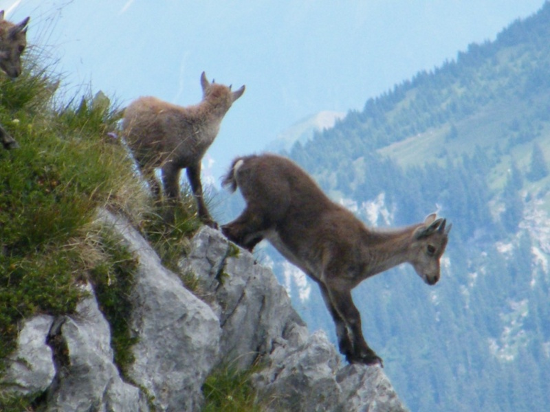 La faune du massif Photo_20