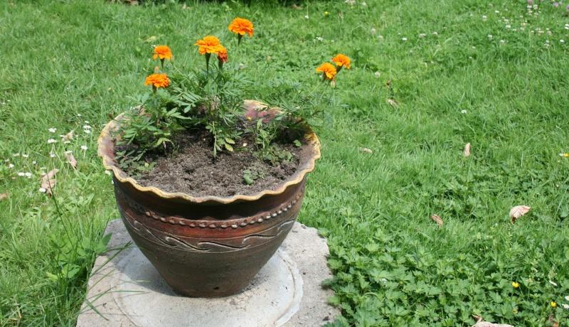 de belles idées d'arrangements floraux en pots Arrang10