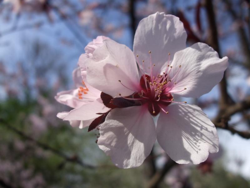 Floraisons du mois d'avril - Page 2 Dscf3312