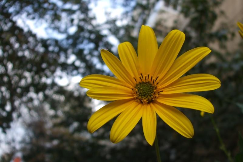 floraisons d'octobre Dscf3410