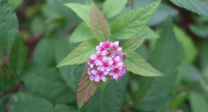 floraisons d'octobre Dscf3413
