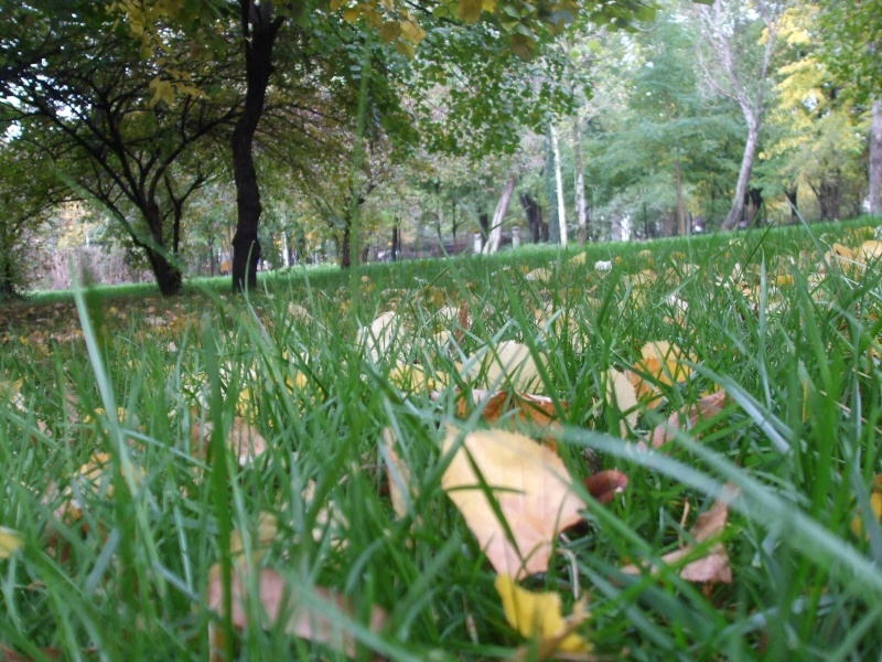 floraisons d'octobre Dscf3912