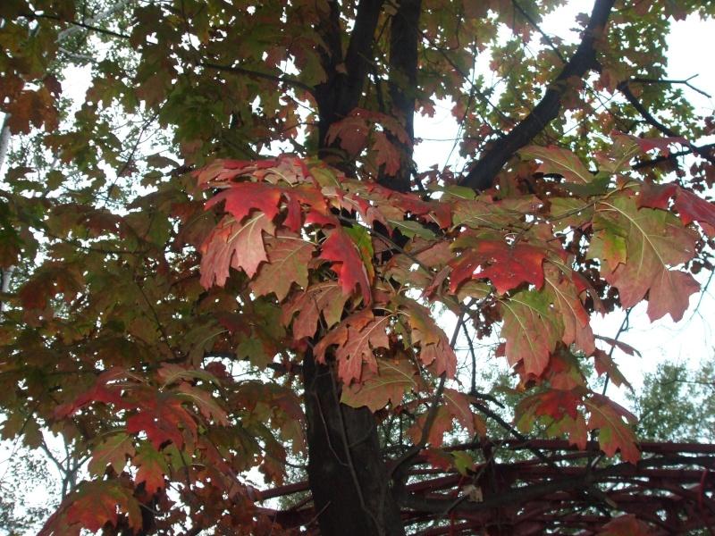 floraisons d'octobre Dscf3914