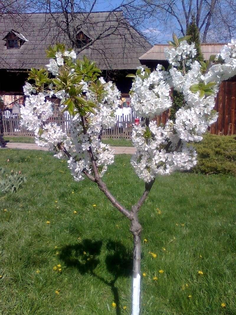 floraisons des arbres et des arbustes - Page 3 Imagin18