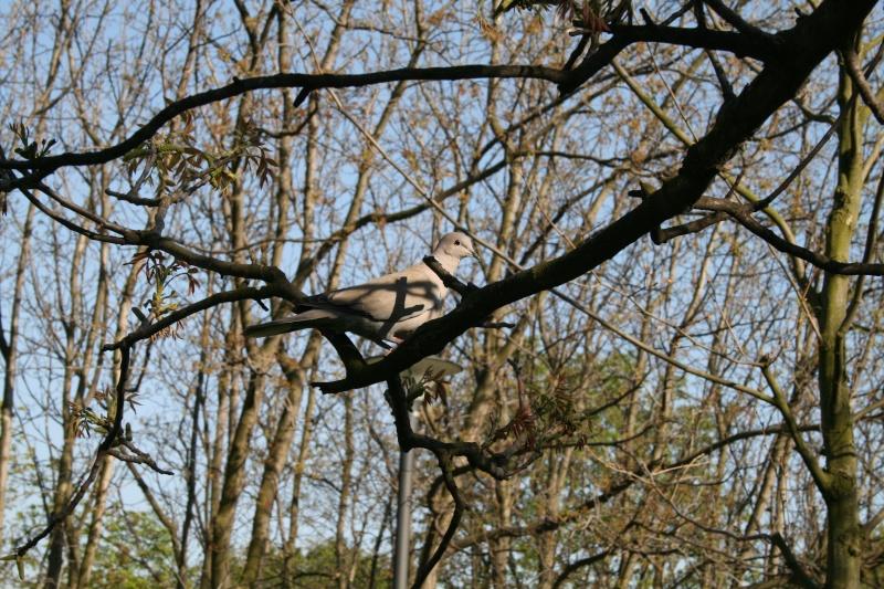 Oiseaux de printemps Img_5110