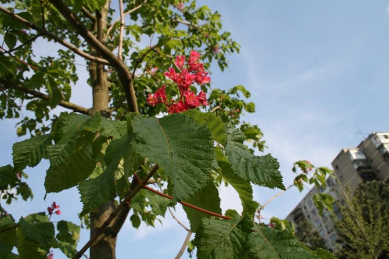 floraisons des arbres et des arbustes - Page 4 Img_5610