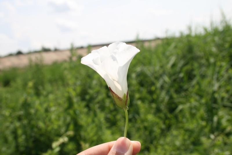 Floraisons du mois de juin Img_6511