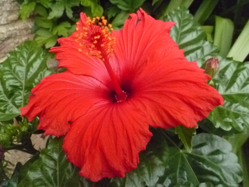 Floraisons du mois de juin 00123