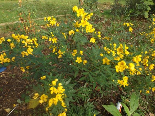 Floraisons de novembre - Page 10 00246