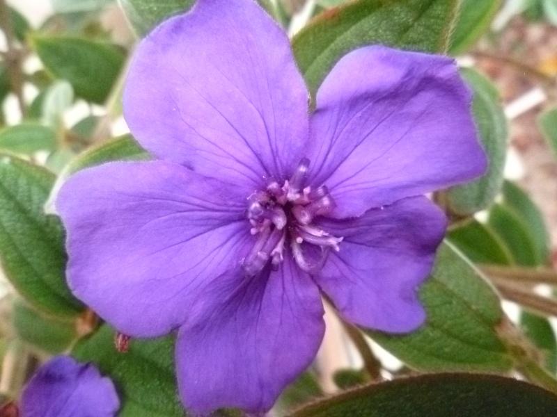 Floraisons du mois de juin 00422