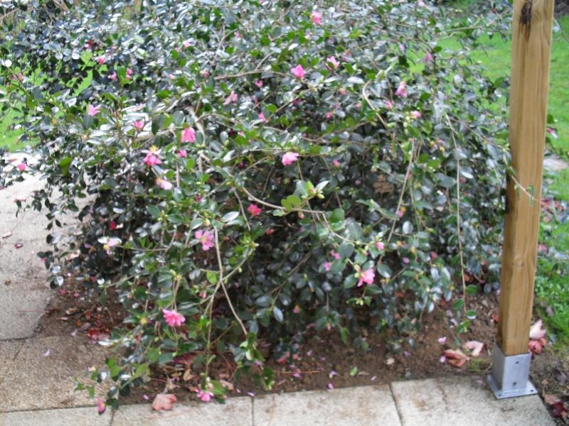 floraisons d'octobre - Page 2 00511