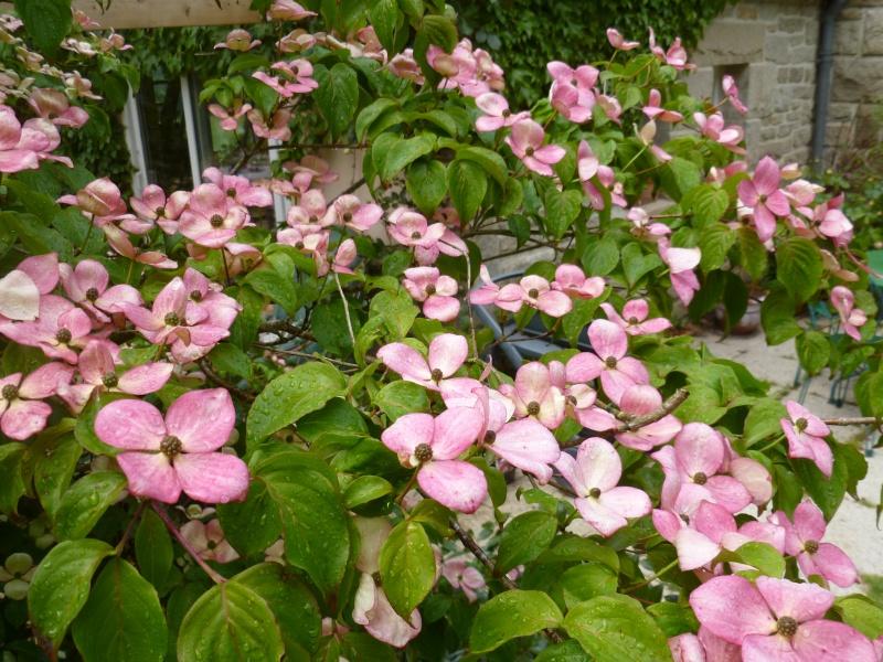 Aperçus de mon jardin Breton 00521