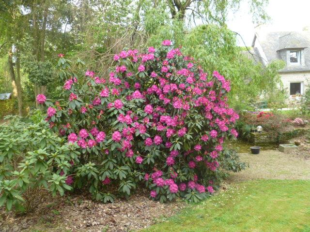 Aperçus de mon jardin Breton 00717