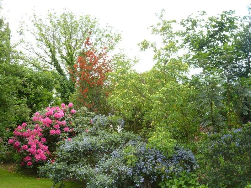 Aperçus de mon jardin Breton 00721