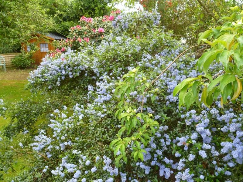 Aperçus de mon jardin Breton 00815