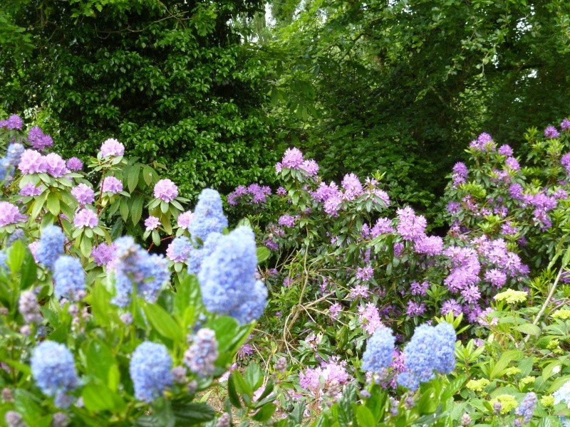 Aperçus de mon jardin Breton 00817