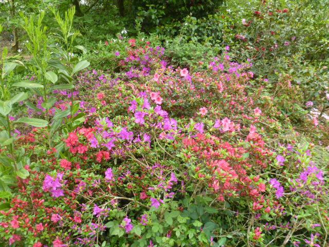 Aperçus de mon jardin Breton 00915
