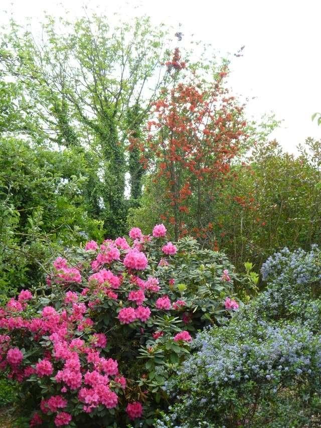 Aperçus de mon jardin Breton 00919