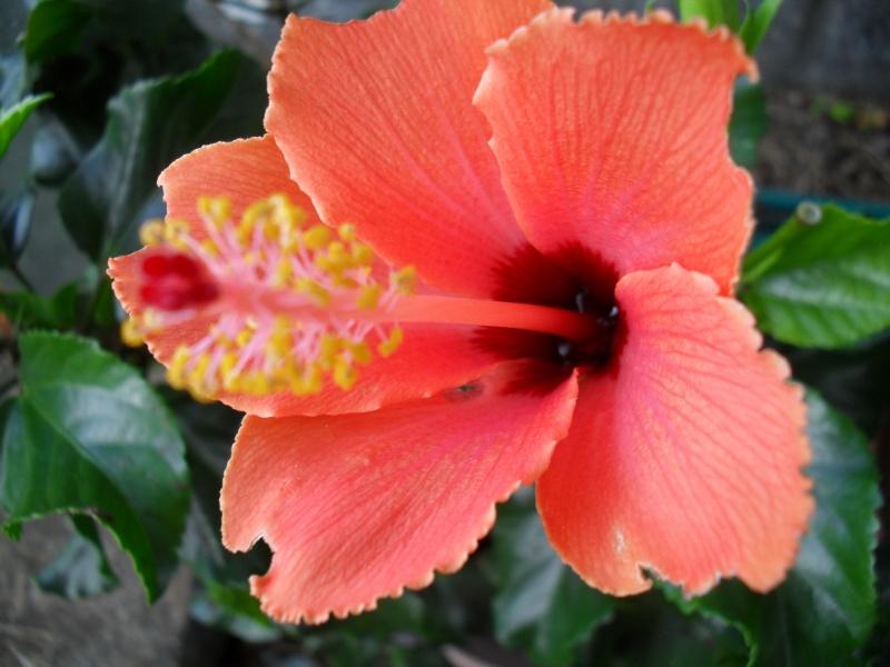 floraisons d'octobre - Page 2 01010