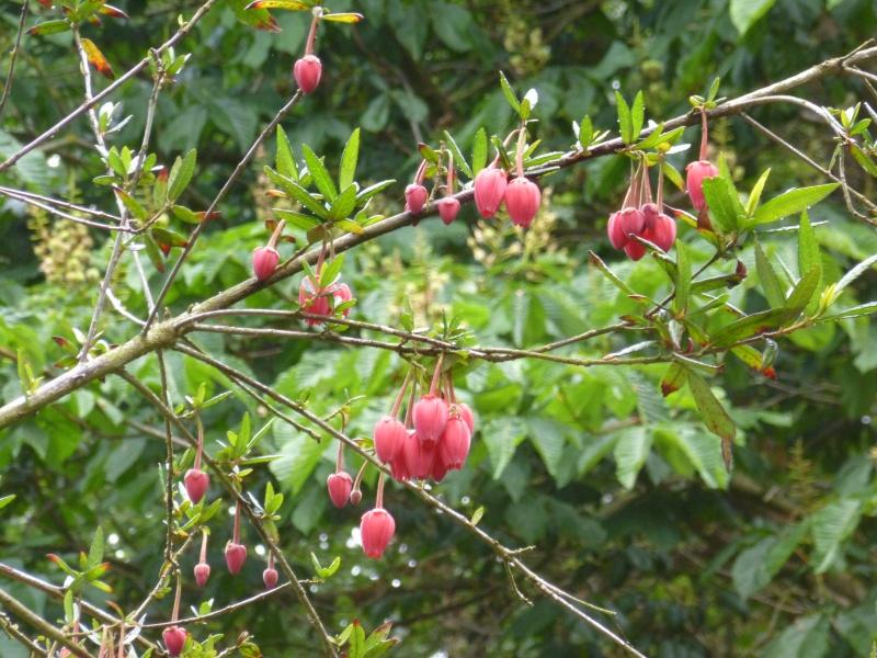 Aperçus de mon jardin Breton 01221