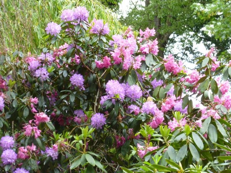 Aperçus de mon jardin Breton 01323