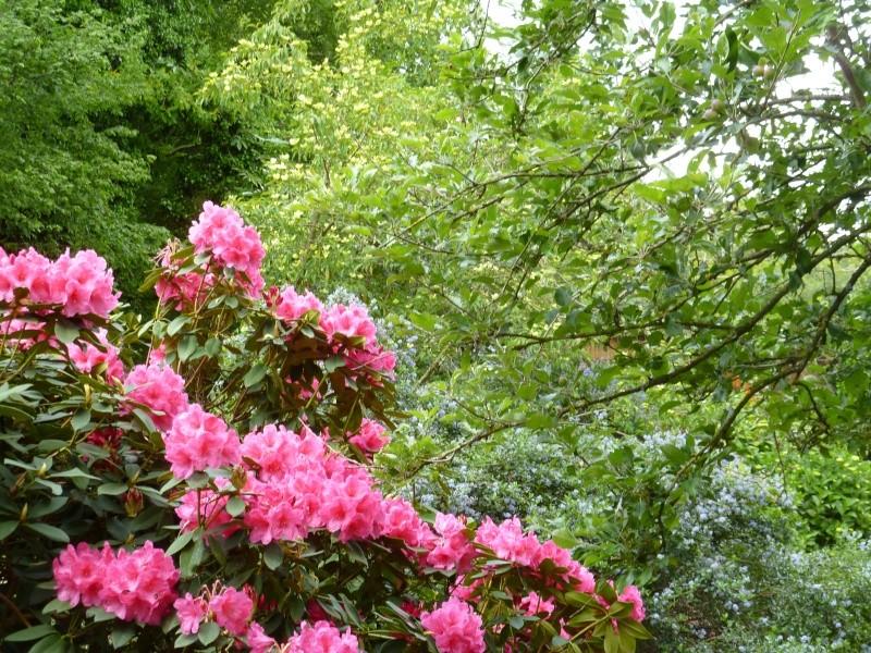 Aperçus de mon jardin Breton 01325