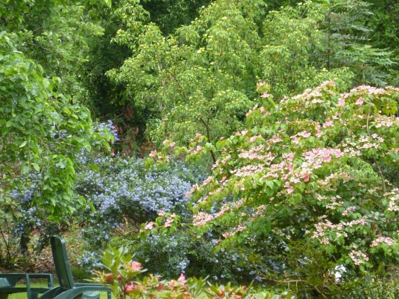Aperçus de mon jardin Breton 01516