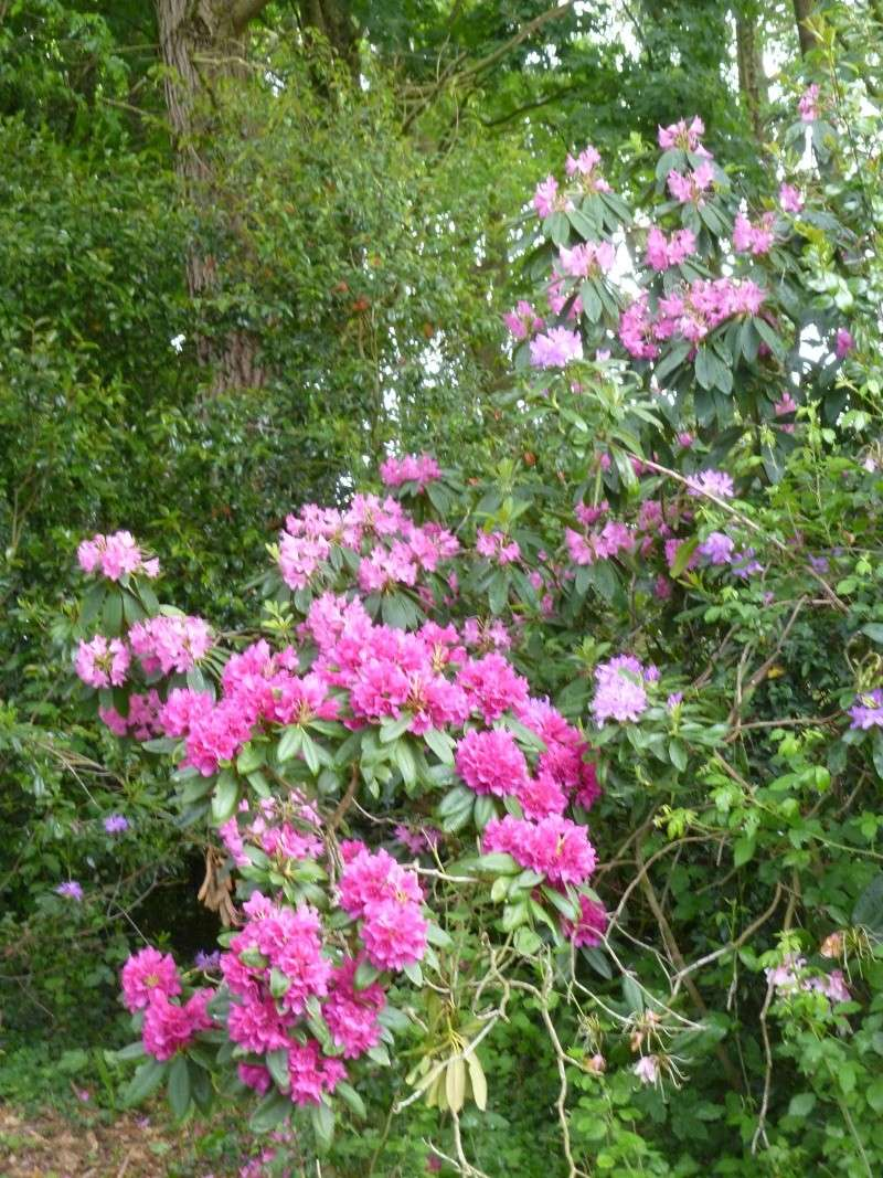 Aperçus de mon jardin Breton 01617