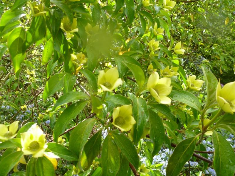 Aperçus de mon jardin Breton 01713