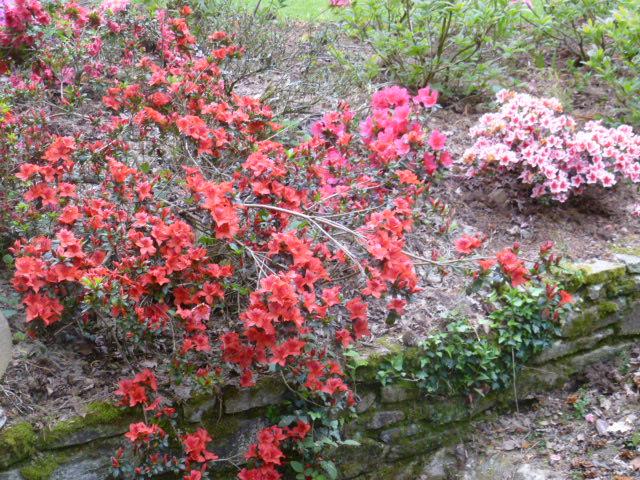 Aperçus de mon jardin Breton 02011