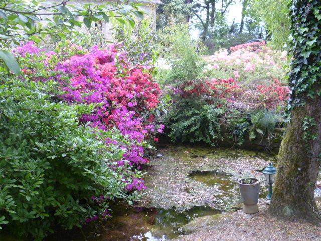 Aperçus de mon jardin Breton 02413