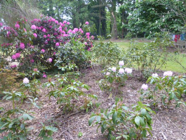 Aperçus de mon jardin Breton 02611