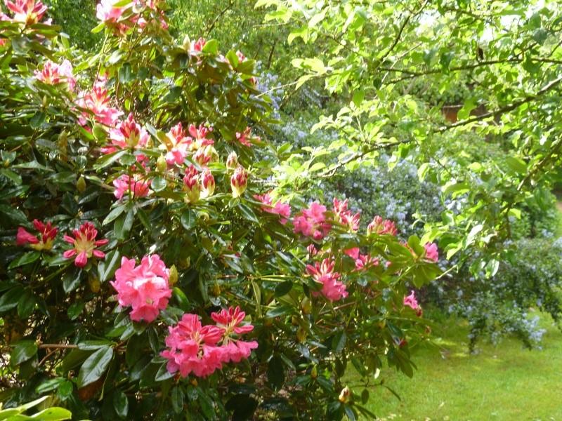 Aperçus de mon jardin Breton 02812