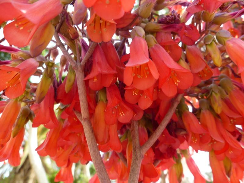Floraisons de succulentes et cactées - Page 6 03010