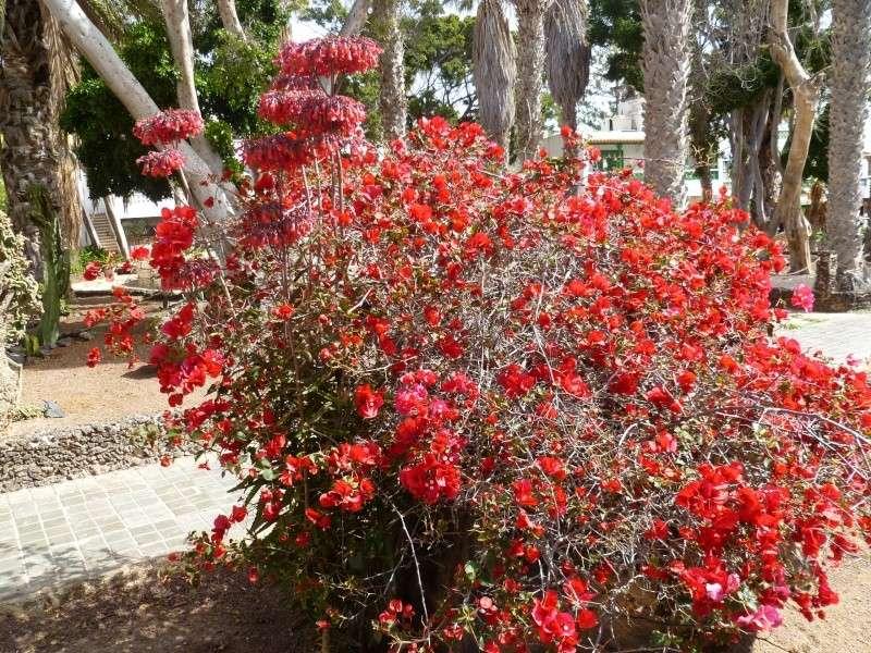 Floraisons de succulentes et cactées - Page 6 03110