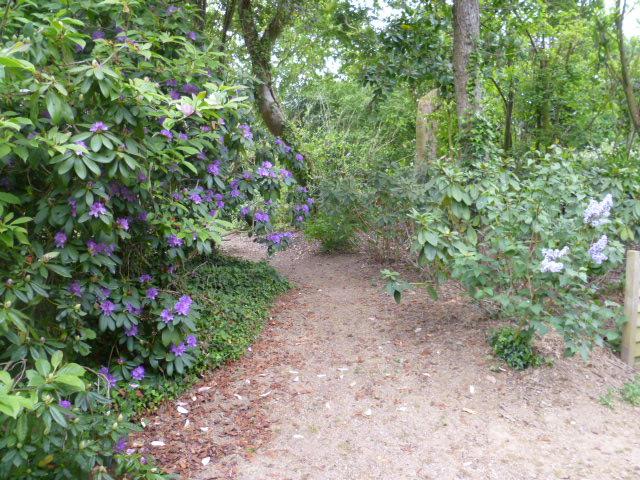 Aperçus de mon jardin Breton 03213