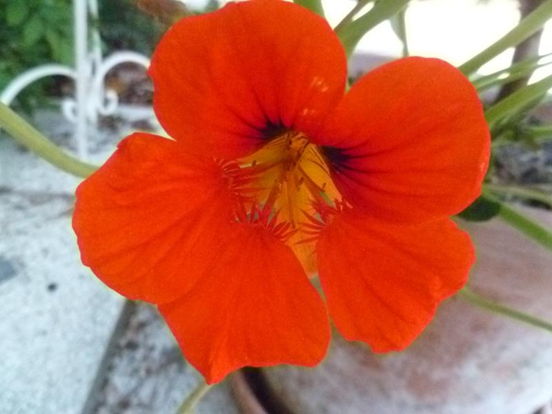 Floraisons du mois de juin 03612