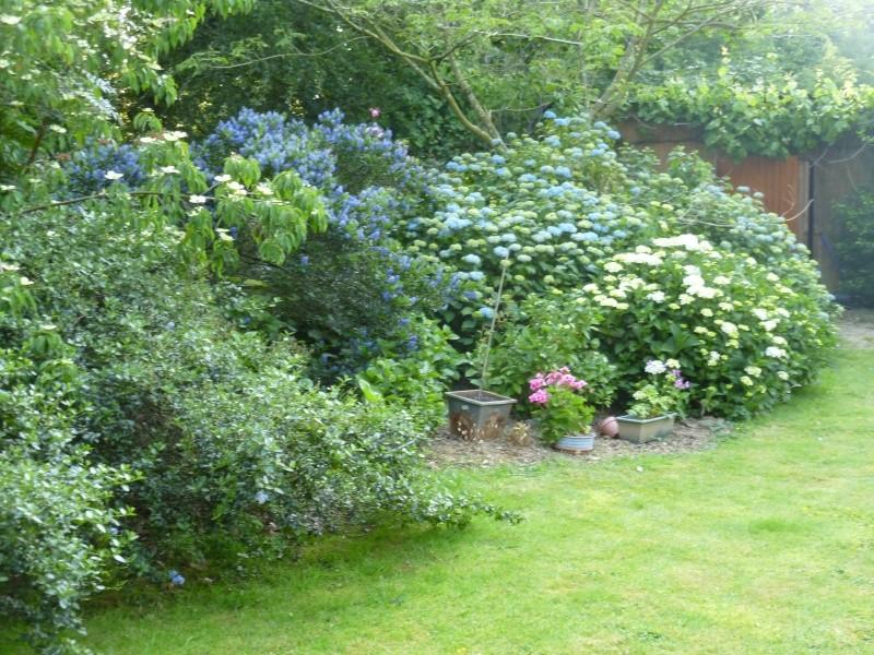 massifs en bleu - fleurs bleues et belles associations 04013