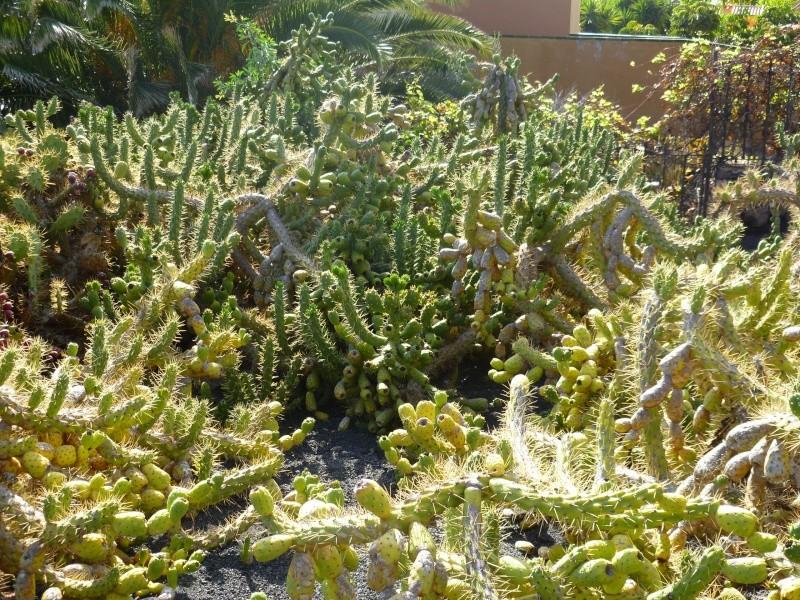 Floraisons de succulentes et cactées - Page 6 04310
