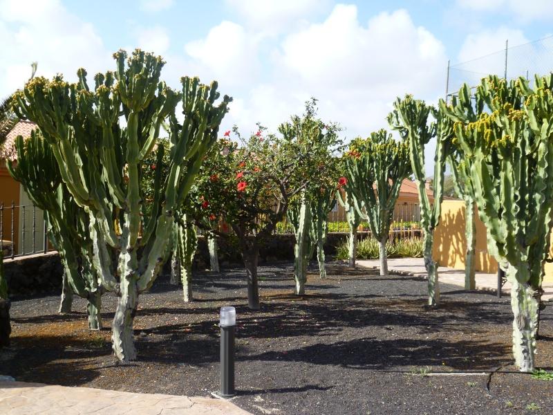 Floraisons de succulentes et cactées - Page 6 04810