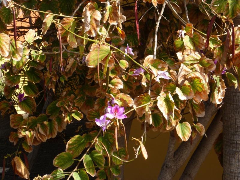 Floraisons de succulentes et cactées - Page 6 05110