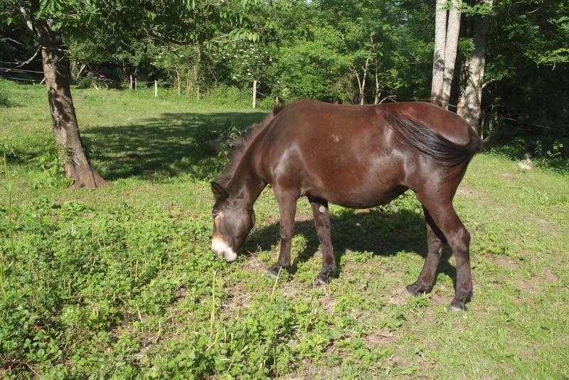 VIOLETTE dite PETALE - ONC Mule née en 2006 - adoptée en octobre 2012 par Jean 2015_810