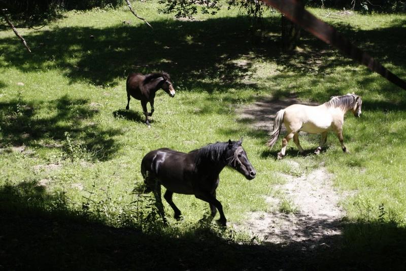 VIOLETTE dite PETALE - ONC Mule née en 2006 - adoptée en octobre 2012 par Jean 2015_815