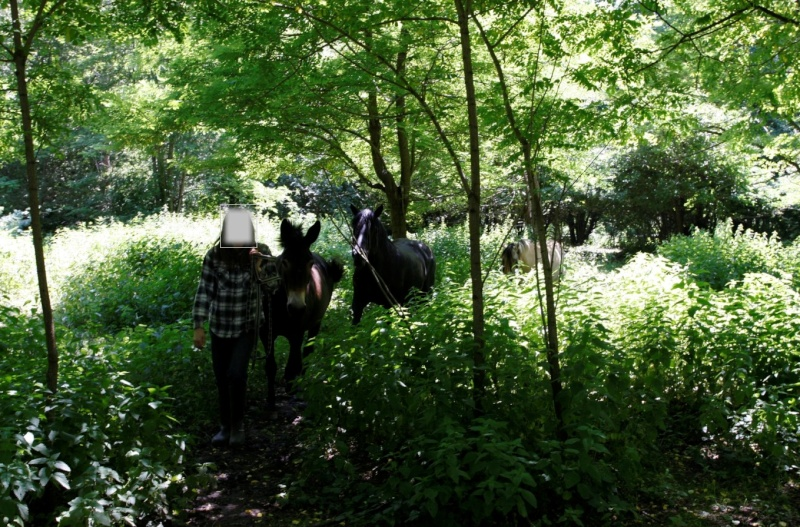 VIOLETTE dite PETALE - ONC Mule née en 2006 - adoptée en octobre 2012 par Jean 2015_818