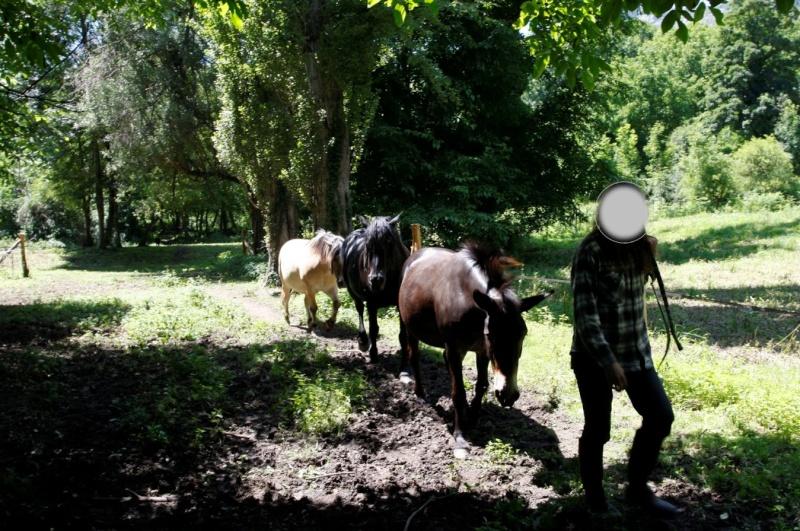 VIOLETTE dite PETALE - ONC Mule née en 2006 - adoptée en octobre 2012 par Jean 2015_819