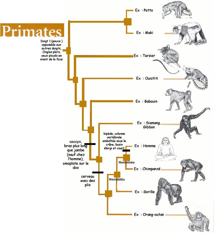 Le grand virage. Qu'est-ce qu'on attend pour être heureux? - Page 2 Primat11